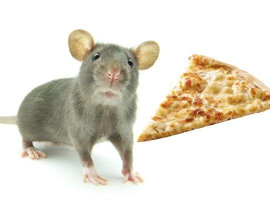 635784489570401000-pizzarat